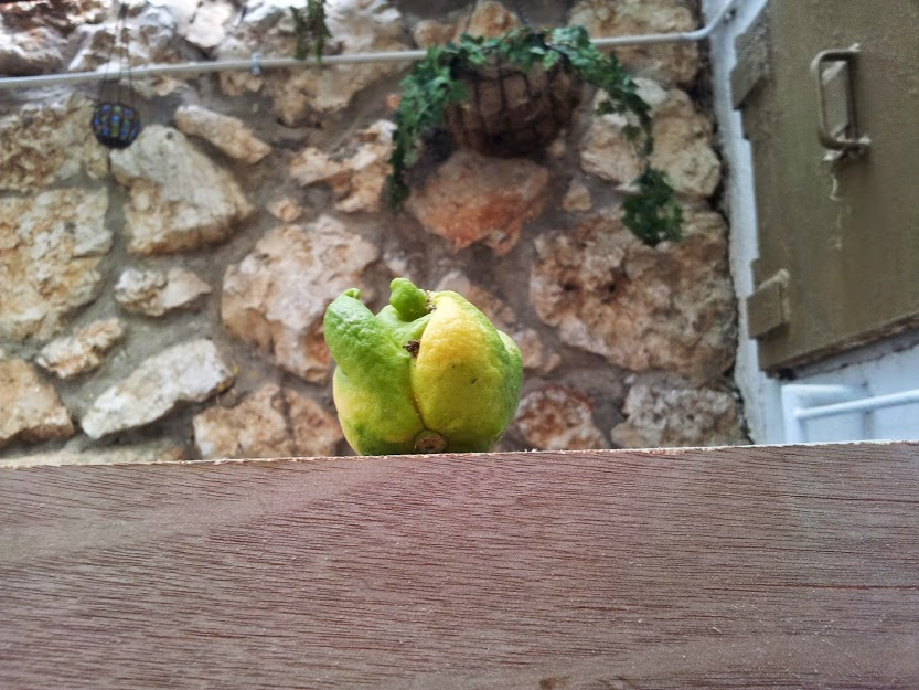 strange lemon